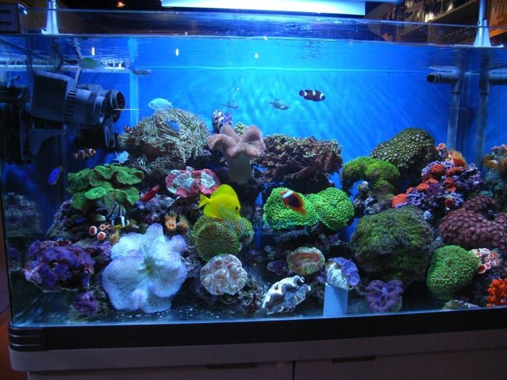 Best range of Aquarium Led Lighting online  http://www.aqualed.com.au/ Are you looking for the best LED light for plant growth, Coral growth, simulating natural weather conditions or simply having the latest technology on the market. Our aim is to supply the best quality LED lights at affordable prices. #aquariumlighting #aquarium #led #lighting
