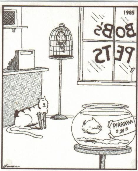 Far Side featuring the cat and the piranha.