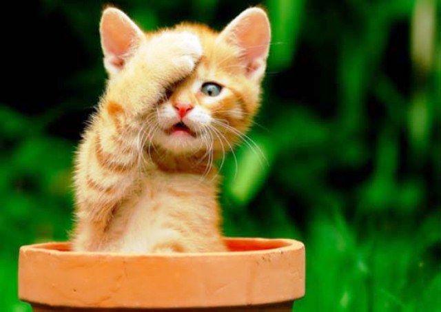 32 Gambar Wallpaper Kucing Paling Lucu - Foto Gambar Terbaru