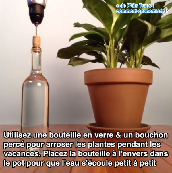 L'arrosage de vos plantes d'intérieur va se faire tout seul —même pendant votre absence ! Tout ce dont vous avez besoin, c'est d'une bouteille en verre et d'un bouchon en liège.  Découvrez l'astuce ici : http://www.comment-economiser.fr/arroser-plantes-quand-part-vacances.html?utm_content=bufferc412e&utm_medium=social&utm_source=pinterest.com&utm_campaign=buffer