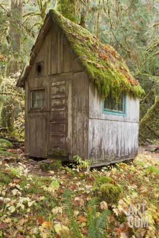 Weathered Old Cabin in Forest, Olympic National Park, Washington, USA Photographic Print by Jaynes Gallery at Art.com