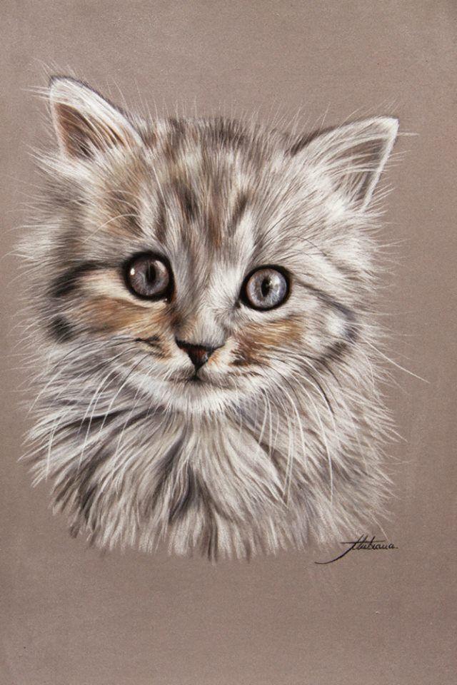chat pastel Tubiana Marion - Pastels et photographies