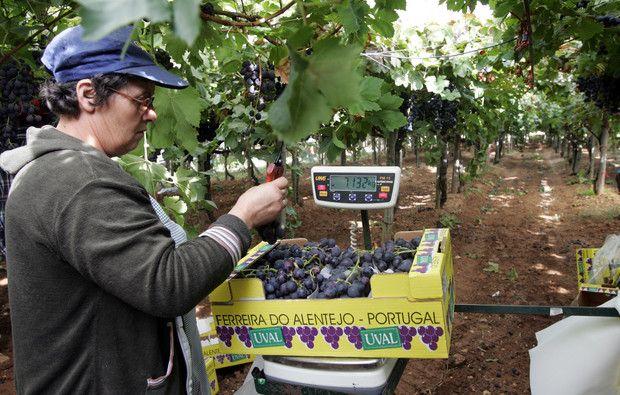 Portugal é o líder mundial no consumo de vinho per capita