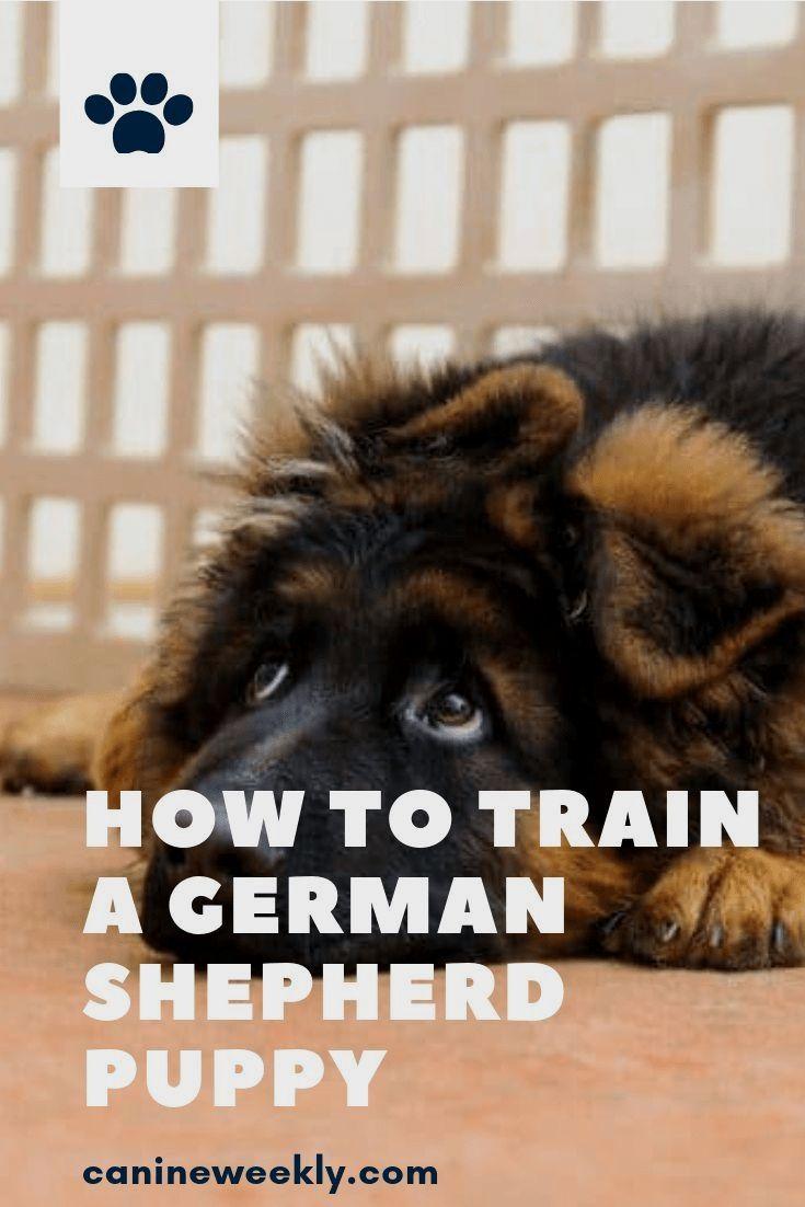 Crate Training German Shepherd Puppy Free Mini Course Puppy