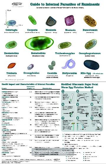 Guide to internal parasites of ruminants bunostomum ostertagia.