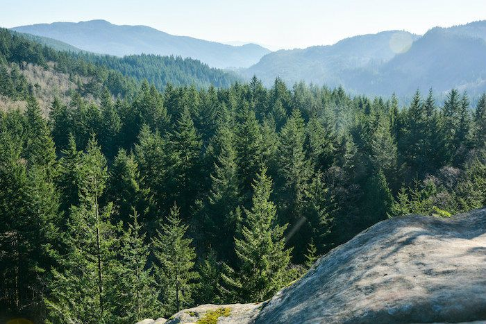 Take a Hike: Pine and Cedar Lakes Trail in Larrabee State Park