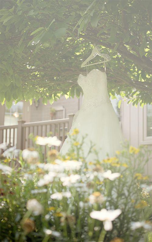 Kitchener-Waterloo Wedding Photographer   Artistic wedding photography, engagement photos and portraits   chasephotography.ca