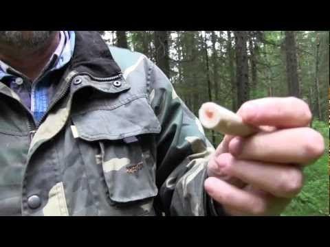 Haaparousku on yksi suomalaisten suosikkisienistä - Haaparouskun tunnistaa maitiasinesteestä ja ontosta jalasta. Se sopii varsinkin sienisalaattiin.  Maitia tuottavat sienet eivät ole myrkyllisiä. Pitääkö tämä vanha ohjenuora vielä paikkaansa? (video 1:36).