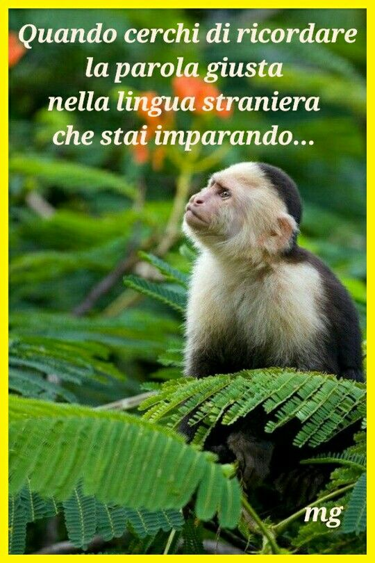 When you try to remember the right word in the foreign language you are learning (www.facebook.com/funandeasyitalian).