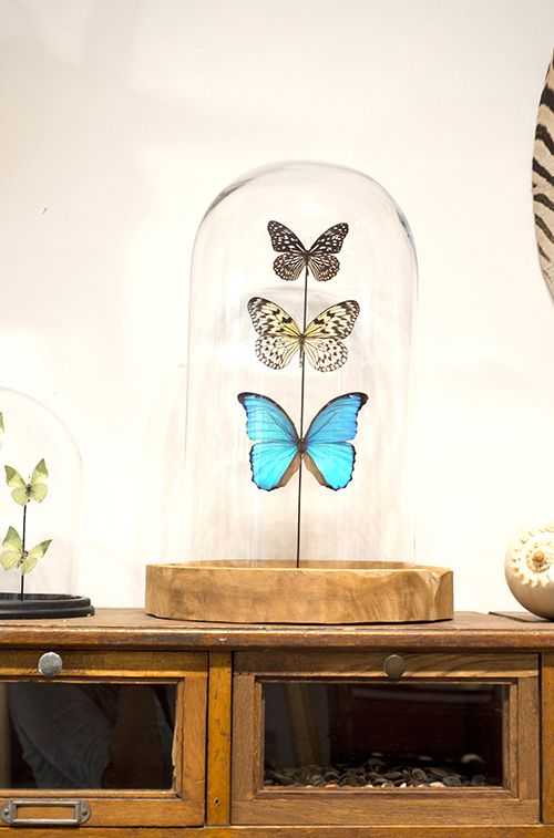 Glassdome with butterflies