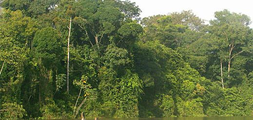 French Guiana : Rain forest