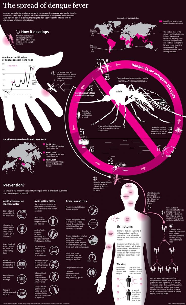 INFOGRAPHIC: Everything you need to know about dengue fever