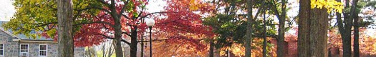 Part of a roofline shows from one building. Trees with fall color leaves on them fill most of the photo. A lamp-post is near center of the photo.