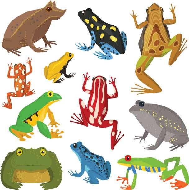 Frog Cartoon Tropical Animal Cartoon Nature Icon Funny And