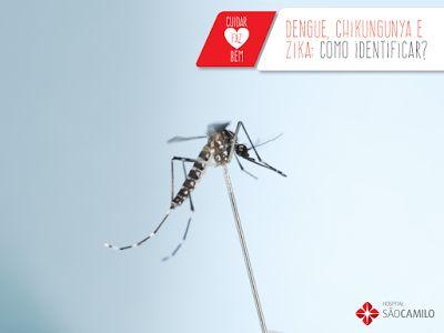 Blog com dicas de maternidade!: Qual a diferença entre dengue, zika e chikungunya?...