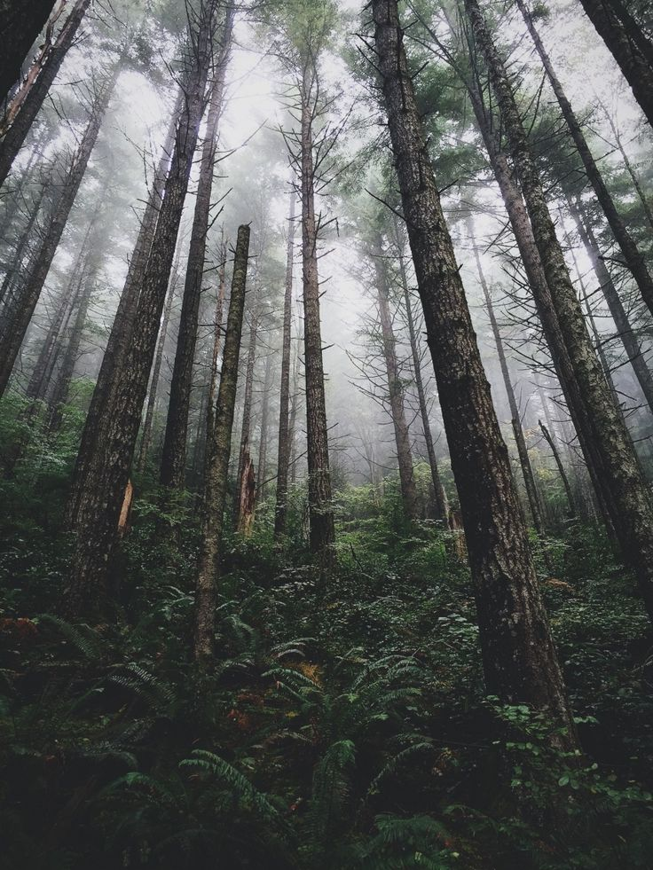 Woods | VSCO | brperry | nature/landscapes | Pinterest