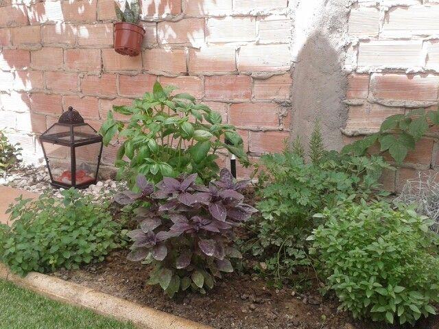 34++ Planta de hojas moradas y verdes inspirations