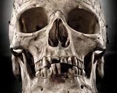 """Artículos similares a Real Human Skull, Anatomy Photography, 8x12 Fine Art Print, Desaturated, Bone, Dark, Macabre - """"My Thick Skull"""" en Etsy"""