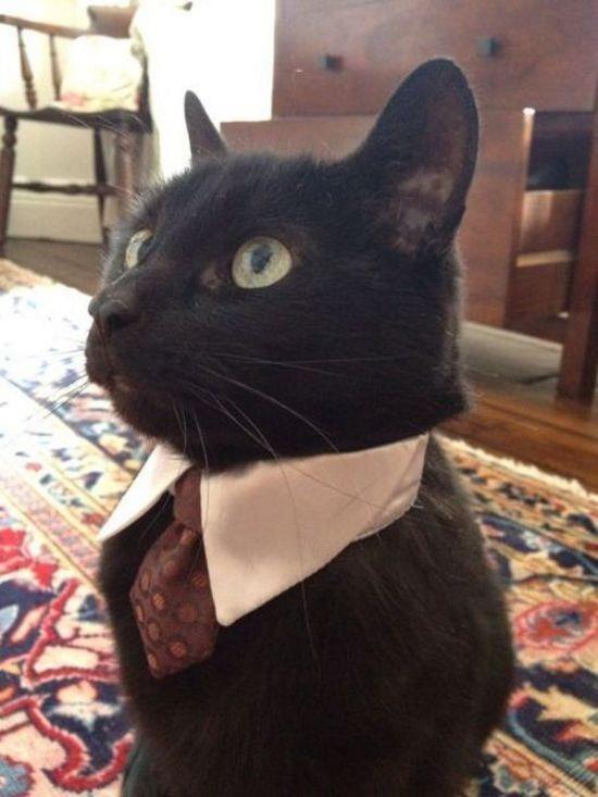 Cat Collared Shirt and Tie? Hilarious (thanks @Virginia Brummett)