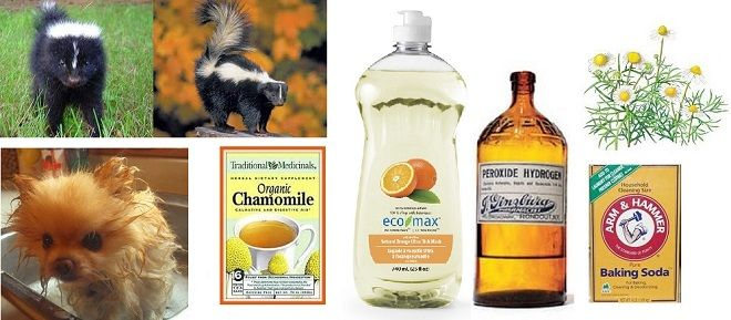 Skunk Spray Removal Home Remedies for Dogs, Cats - natural, non-toxic, simple, effective and quick to make