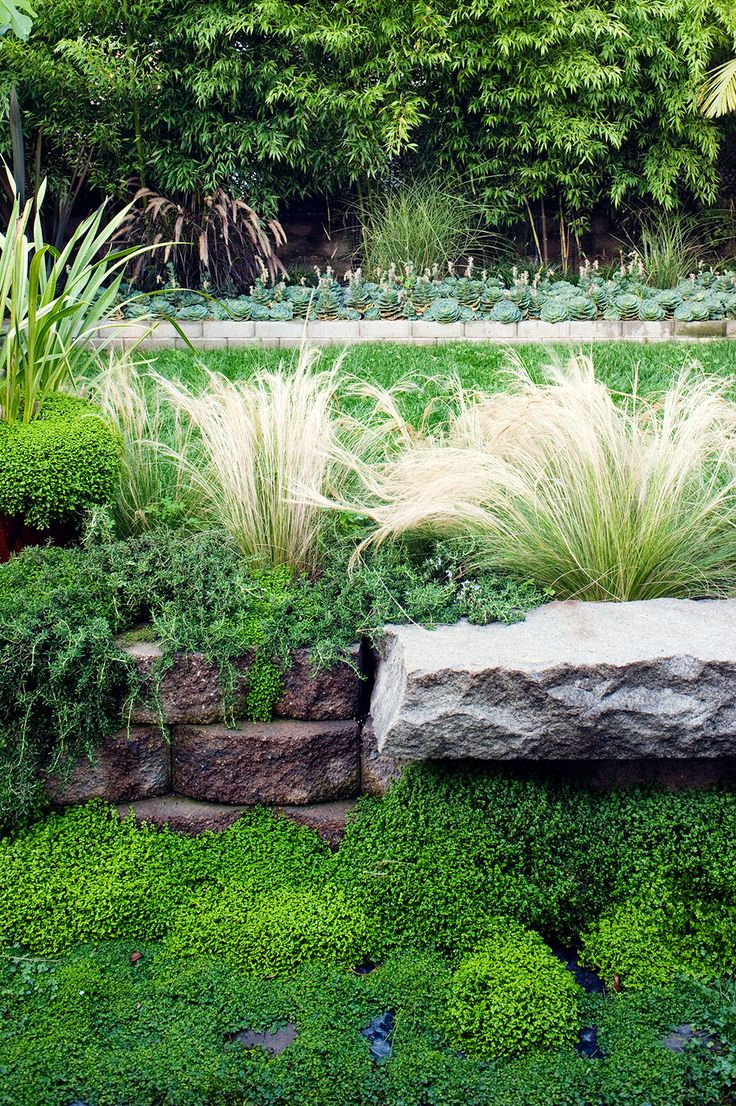 lush planting using beautiful grasses succulents with a quiet palette in san francisco garden of designer antonio martins