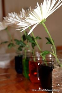 Toddler Activity - White flowers in food coloring (Toddler Science)