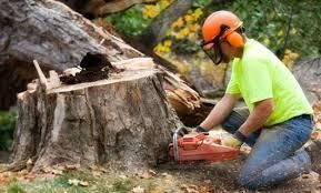 New #torontobusiness https://t.co/AO44Ifiu2q #TorontoTreeRemoval Services Areas #ontariohangouts  https://t.co/2S01aw2D7L