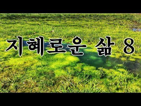 명상의 말씀 - 지혜로운 삶 8  (45분)