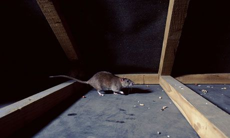 Getting rid of rats and bedbugs | Rachel Holmes, The Guardian