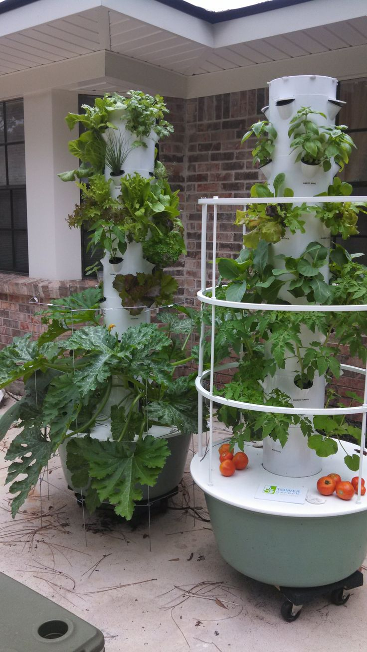 My tower garden at 20 days.  (the tomatoes are from my bucket garden, but mine are growing on the tower