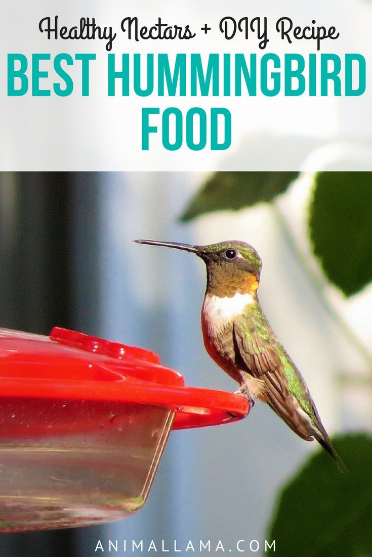 Best Hummingbird Food 5 Healthy Nectars Diy Nectar Recipe