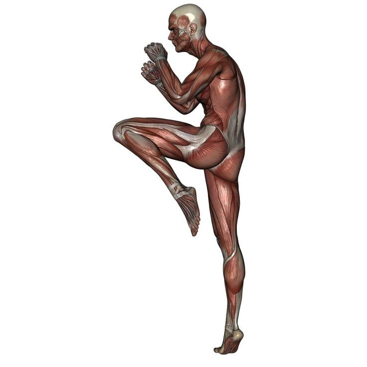 118 best anatomy images on pinterest human anatomy artistic figure drawing pose of male martial art action combat fighting kicking drawing toolsfigure drawingsmartial artsemptyanatomyposebody ccuart Image collections