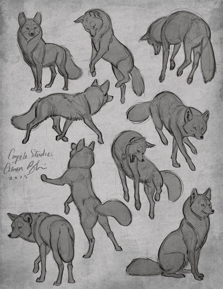wolf front poses - 720×932