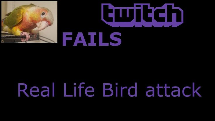 Stream Fail - Real life Bird Attack while streaming!