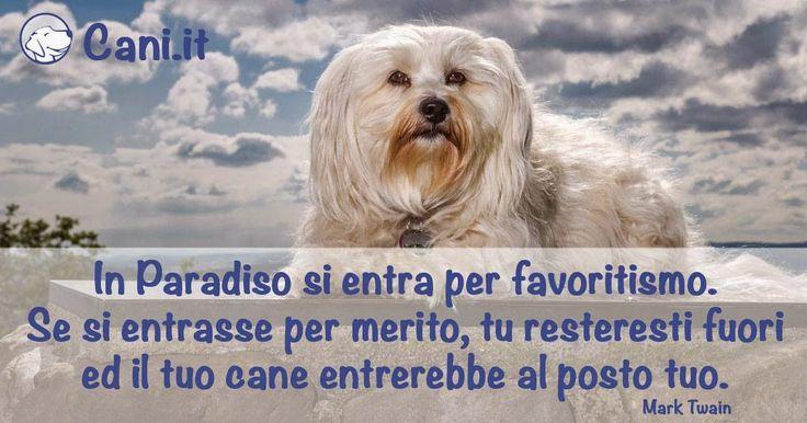 In Paradiso si entra per favoritismo. Se si entrasse per merito, tu resteresti fuori ed il tuo cane entrerebbe al posto tuo. #cani #paradiso #cani.it