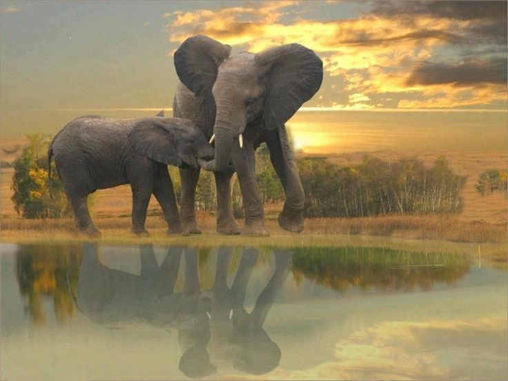 Wow beautiful photo of Elephants
