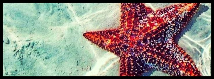 Starfish Facebook cover photo