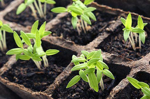 Zahrada v únoru - Užitková zahrada