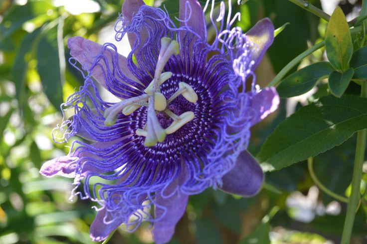 36 best mississippi native plants images on pinterest
