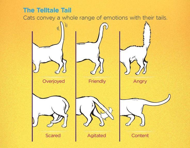 حركات القطط ومعناها لغة الجسد عند القطط دليل العيادات البيطرية دكتور بيطري بين يديك Cat Body Cat Language Signs Cat Language