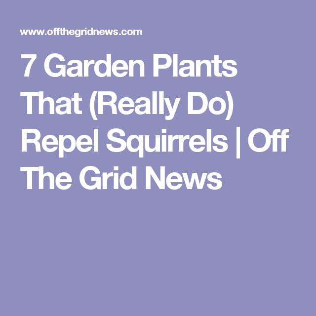 7 Garden Plants That (Really Do) Repel Squirrels | Off The Grid News
