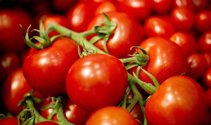 Coltivare il pomodoro in vaso