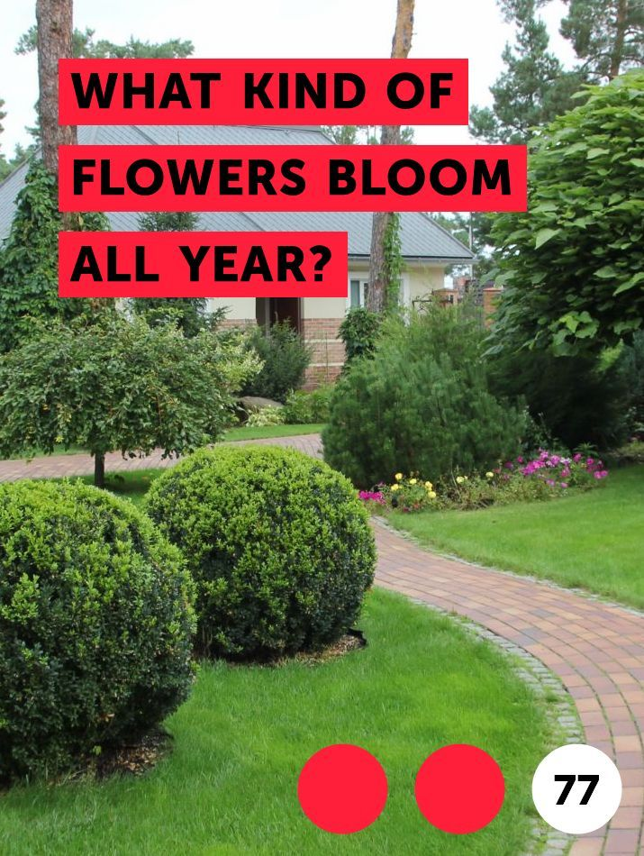 What Kind Of Flowers Bloom All Year South Facing Garden Plants