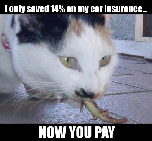 Catlizard funny-stuffLaugh, Funny Pics, Too Funny, Catlizard Funnystuff, Catlizard Funny Stuff, So Funny, Cat Stuff, Cat Following, Humor Funny
