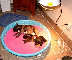 Puppy Whelping Box Google Search Yorkie Puppies Whelping Box