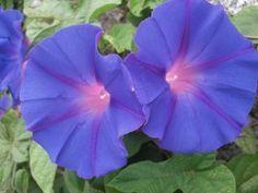 flores silvestres nombres - Buscar con Google