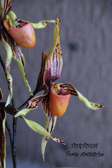 Paphiopedilum or Slipper Orchid.