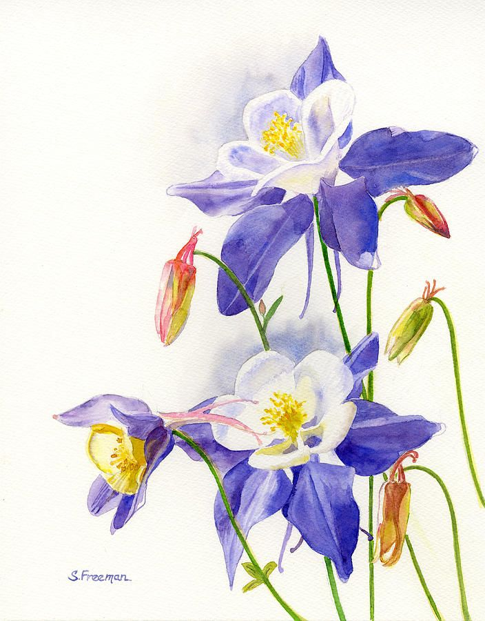 best  watercolour columbines images on   art, Beautiful flower