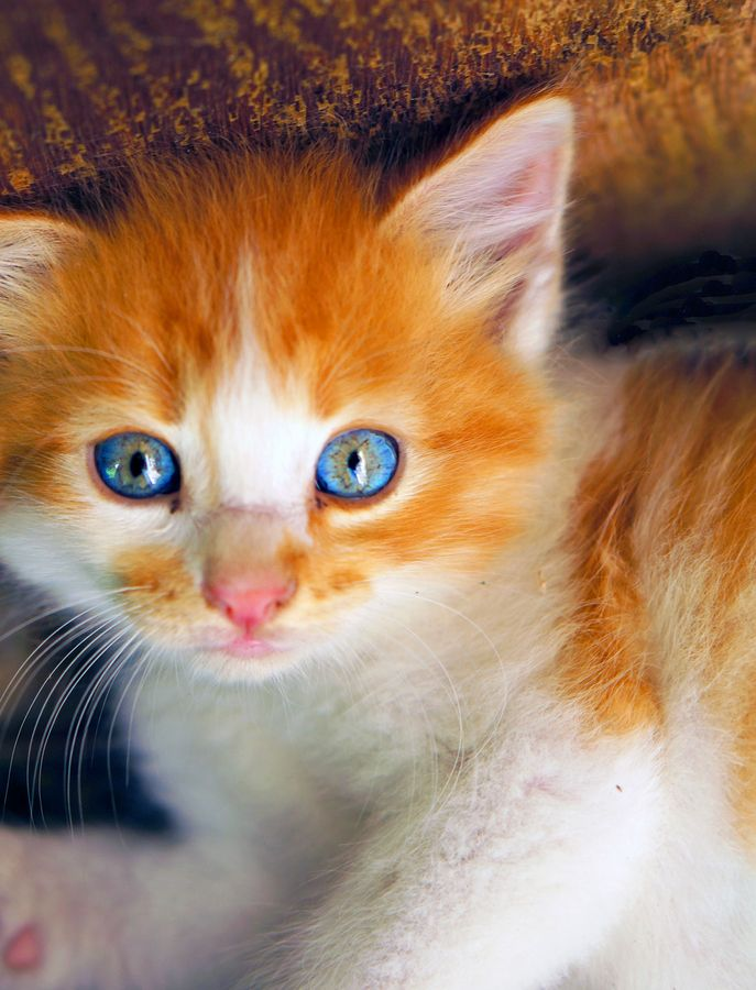 17 Best Images About Colors Blue And Orange On Pinterest