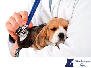LA MEJOR CLÍNICA VETERINARIA DE MÉXICO. Los perros que tienen problemas pancreáticos no pueden hacer la digestión con la misma facilidad que los perros sanos, por lo que requerirán de comida especial para mejorar su salud. En Clínica Veterinaria del Bosque te recomendamos acudir a nuestras instalaciones, para que nuestros veterinarios revisen a tu mascota y reciba el tratamiento adecuado. #veterinariadelbosque